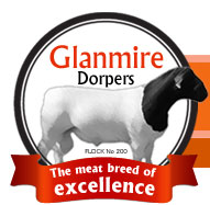 Glanmire Dorpers - The Meat Breed of Excellence